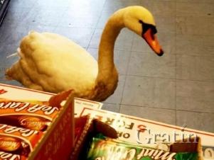 Лебедь в продуктовом магазине